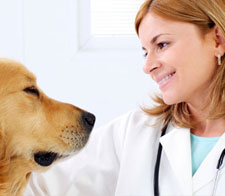 Mayaguez Veterinary Clinic